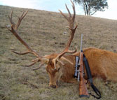 Kilimanjaro custom Rifles Trophy of Red Stag