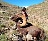 desert big horn taken with artemis 300 win rifle
